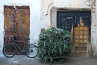 A bicycle delivery of green leafy cardoons stands against the white walls and dilapidated doors of a street in Sefrou, Morocco.