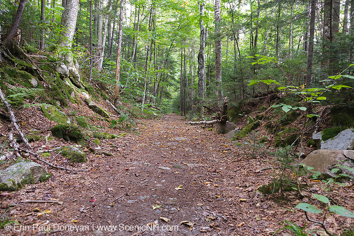Franconia Brook Trail in the Pemigewasset Wilderness of New Hampshire during the summer months. This trail follows the old East Branch & Lincoln Railroad (1893-1948).
