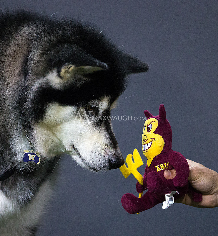 Dubs ponders whether to rip Sparky to shreds... as his team was doing on the field.