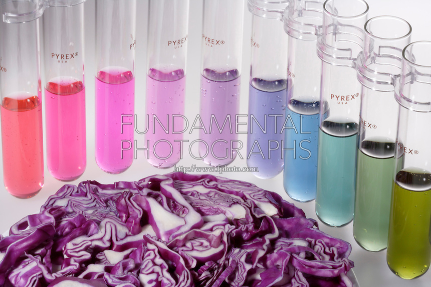 ANTHOCYANIN: RED CABBAGE pH INDICATOR<br /> (Variations Available)<br /> The Pigment Molecule Flavin Is Affected By pH.<br /> Solution color responds to changes in pH or hydrogen ion concentration. Very acidic solutions donate hydrogen ions, have low pH &amp; will turn the flavin red, neutral turns purple, bases accept H+ ions &amp; turn greenish-yellow.  Range of pH represented is 1-10