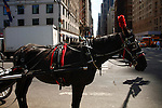 FEATURES Carriage Horse in central park New York
