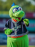 1 September 2013: The Vermont Lake Monsters Mascot Champ entertains the fans during a game against the Connecticut Tigers at Centennial Field in Burlington, Vermont. The Lake Monsters fell to the Tigers 6-4 in 10 innings of NY Penn League action. Mandatory Credit: Ed Wolfstein Photo *** RAW Image File Available ****