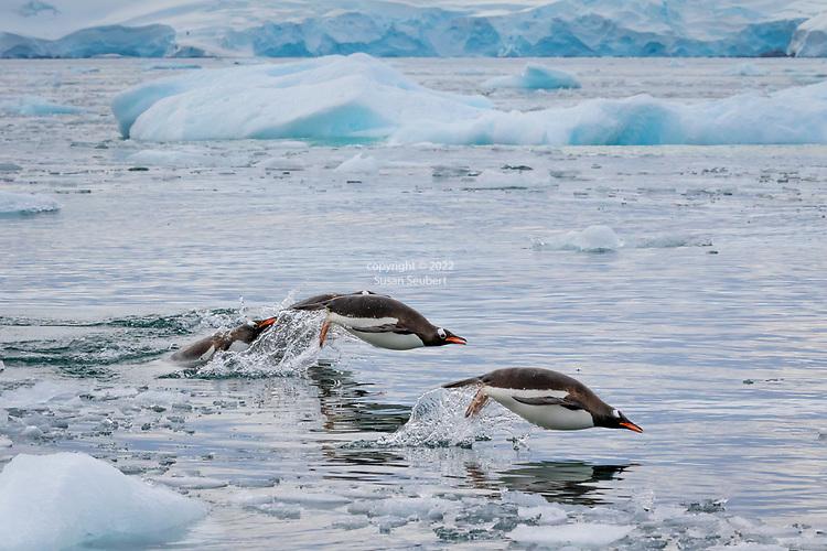 Cierva Cove, Antarctica
