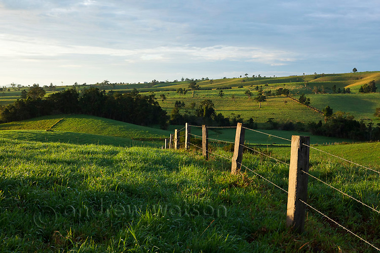 Fence stretching across rolling farmland on the Atherton Tablelands.  Millaa Millaa, Queensland, Australia
