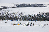 Mushers rest their dogs at the checkpoint of First Chance during the 2008 All Alaska Sweepstakes sled dog race.