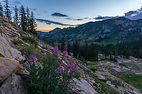 Wildflowers bloom along the trail to Cecret Lake in Little Cottonwood Canyon in Utah's Wasatch Mountains during Summer.
