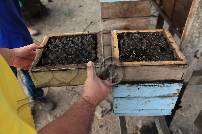 Brazil, Bragança, State of Pará. Professor Giorgio Venturieri has designed a bee-box based on the natural nest architecture. Now it is possible for the farmers to divide the colonies to increase their stock and also to harvest nearly 5 kilos of honey a year without destroying the bees.