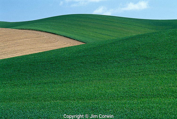 Farm with cultivated fields and fresh crops planted Eastern Washington State USA