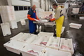 Fish processing facility in Den Helder, Netherlands