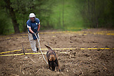 Skipovac Donji. A dog is searching for landmines.