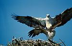 Osprey, Florida