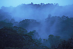 Mist rising in Jungle, Rainforest, Morning, Mount Kinabalu Mountain, Sabah, soft colours, evocative, treetops.Borneo....