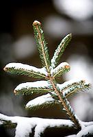 Winter Snow Maryland