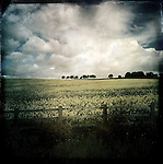 Oil seed rape landscape, Yorkshire, UK