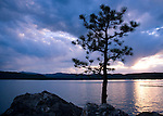Idaho, Coeur d' Alene. A young pine tree clings to a rocky ledge on Tubbs Hill of Lake Coeur d'Alene at sunset.