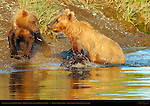Golden Female and Cubs
