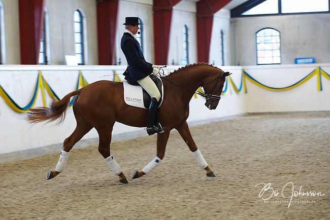 Jan Brink is riding JJ RayBan 1173 (born 2006, 169 cm, exterior 41 points, AB-awarded in 2010).<br /> JJ RayBan 1173 have very interesting bloodlines, both on the father's side as well as on the mother's side with eight generations of champion mares.<br /> At the traditional stallion show at Jan Brink's Tullstorp Dressage Stable near Hassleholm, Sweden.<br /> March 2010.<br /> Only for editorial use.