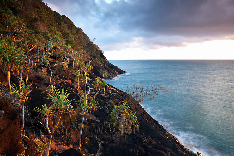 Pandanus palms on the rocky headland at Cape Tribulation, Daintree National Park, Queensland, Australia