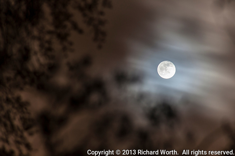 Peer past the branches with their smattering of spring leaves.  Peer again, past the clouds scuttering by.  Keep peering and there it is!   The full moon - Worm Moon, named for the underfoot activity spring brings.