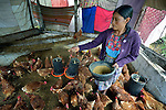 Magdalena Lopez feeds chickens in a women's cooperative poultry raising project in Buena Vista Bacchuc, a small Mam-speaking Maya village in Comitancillo, Guatemala. The project is assisted by the Maya Mam Association for Investigation and Development (AMMID).