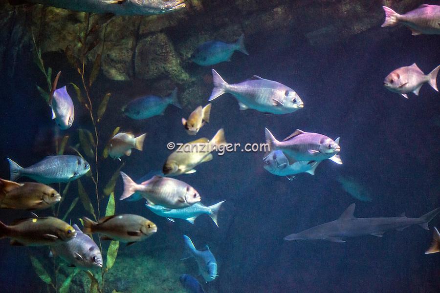 The Aquarium of the Pacific, public aquarium, Shoreline Village ...