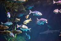 The Aquarium of the Pacific,  public aquarium,  Shoreline Village, Exhibit inhabitants and seascapes of the Pacific, Rainbow Harbor in Long Beach, California, United States