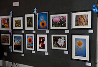 Pictures in the amateur color prints of plants cateogry at the 2011 Orange County Fair.  There were tons of gorgeous entries.  My prize winning picture is in the upper right corner.
