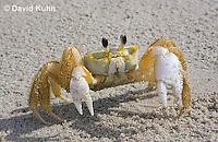 Crabs, Water Crustaceans