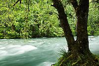 Dosewallips River, Jefferson County, Washington, USA