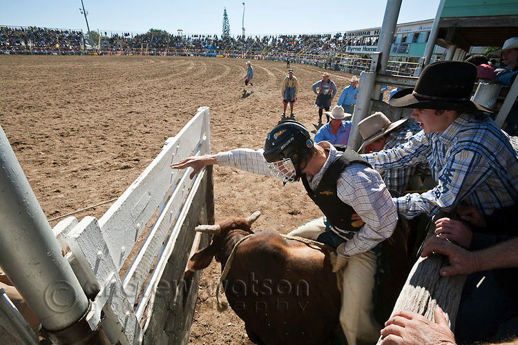 Bull rider in action as the bucking chute is opened.  Mareeba Rodeo, Mareeba, Queensland, Australia