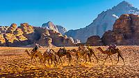 Jordan-Wadi Rum-Camels
