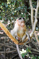 Wild baby monkey sitting on tree branch over the foliage background