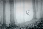 Surreal forest scne with a man jumping into the fog.<br />