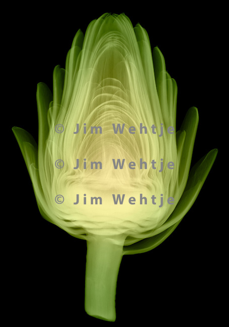 X-ray image of an artichoke half (side view, color on black) by Jim Wehtje, specialist in x-ray art and design images.