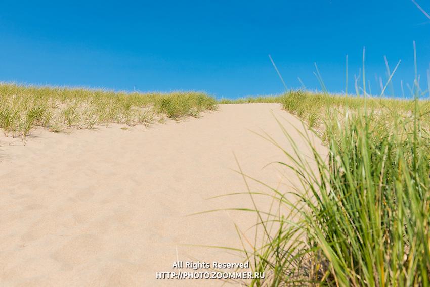Parabolic Dunes of Cape Cod