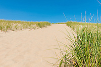 Parabolic Dunes of Cape Cod