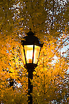 A street lamp is nearly covered by the leaves of a tree