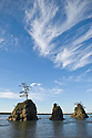 The Three Graces sea stacks in Tillamook Bay near Barview on the northern Oregon coast.