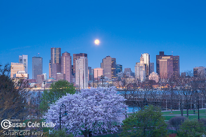 The Full Pink Moon sets over the Boston skyline, Boston, Massachusetts, USA