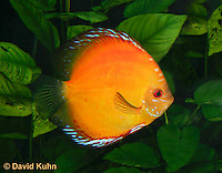 Tropical Freshwater Fish