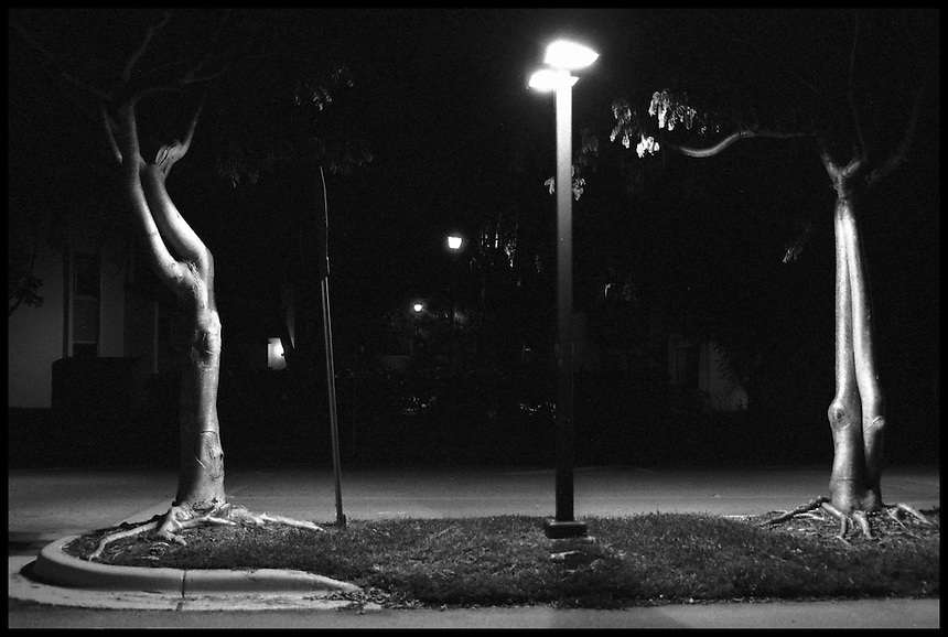 Trees at night<br /> From &quot;Miami in Black and White&quot; series. Miami, 2006