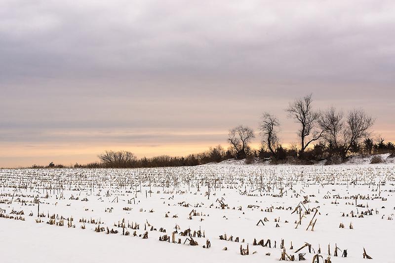 &quot;Dead of Winter&quot;<br /> Winter Farm Field<br /> Riverhead, Long Island