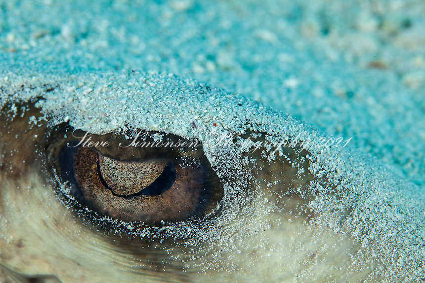 Eye of the stingray<br /> Virgin Islands