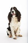 20121129 Karen Large Dogs