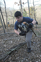 NWA Democrat-Gazette/FLIP PUTTHOFF <br /> Luis Morales drags cedar trees uphill for burning Feb. 18 2017 during glade restoration work on the Shaddox Hollow Trail at Hobbs State Park-Conservation Area.
