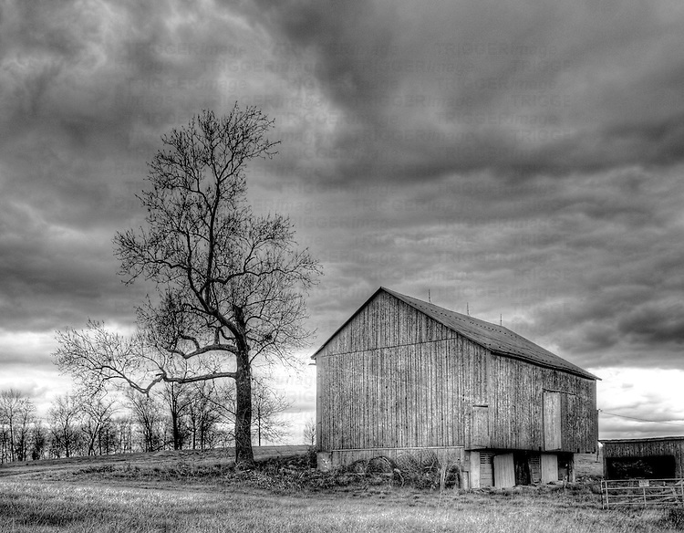 A barn and tree with an approaching storm