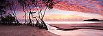 Mangrove trees silhouetted against dawn sky.  Kewarra Beach, Cairns, Queensland, Australia