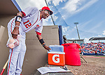13 March 2016: Washington Nationals Manager Dusty Baker puts his game-time fruit on ice prior to a pre-season Spring Training meeting with the St. Louis Cardinals at Space Coast Stadium in Viera, Florida. The teams played to a 4-4 draw in Grapefruit League play. Mandatory Credit: Ed Wolfstein Photo *** RAW (NEF) Image File Available ***