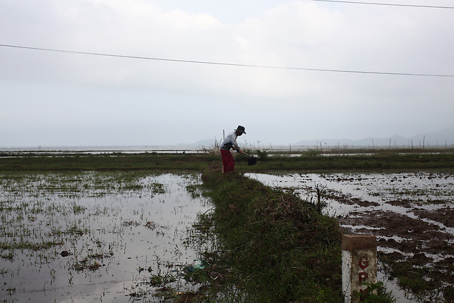 A farmer works his rice paddy along Highway 1 north of Lang Co, in central Vietnam. Dec. 28, 2012.