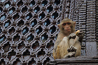 Swayambhu Buddhist temple and Stupa, also calleld the Monkey temple. Kathmandu, Nepal